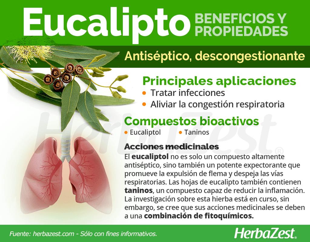 Beneficios y propiedades del eucalipto