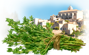 Provençal thyme has received Protected Designation of Origin status.