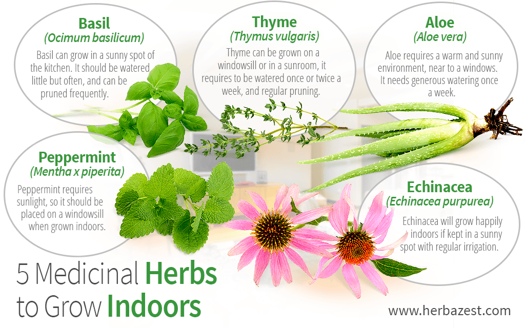 5 Medicinal Herbs to Grow Indoors