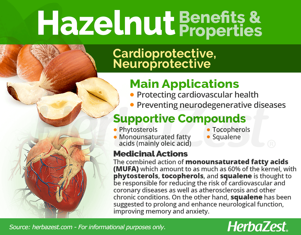 Hazelnut Benefits and Properties