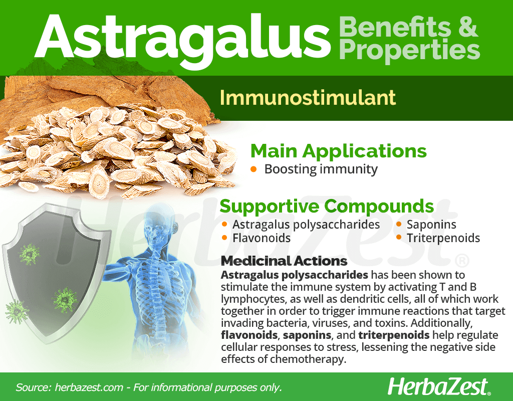 Astragalus Benefits and Properties