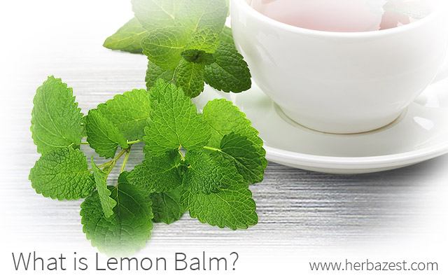 What is Lemon Balm