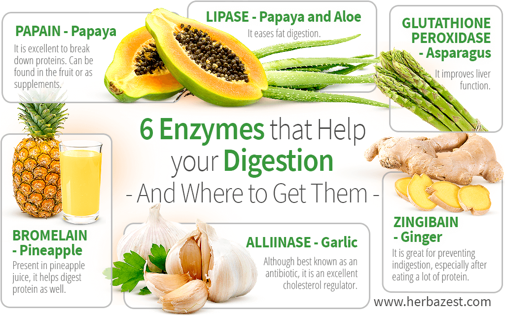 6 Enzymes that Help your Digestion