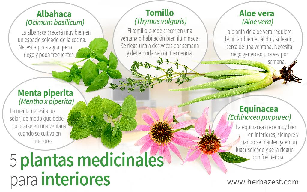 5 plantas medicinales para interiores