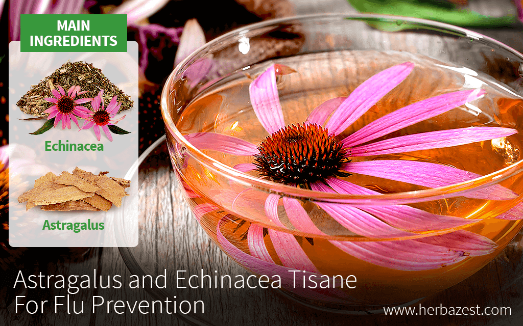 Astragalus and Echinacea Tisane for Flu Prevention