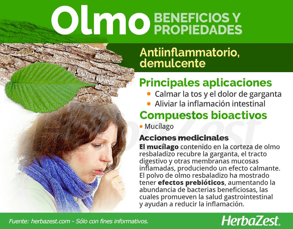 Beneficios y propiedades del olmo