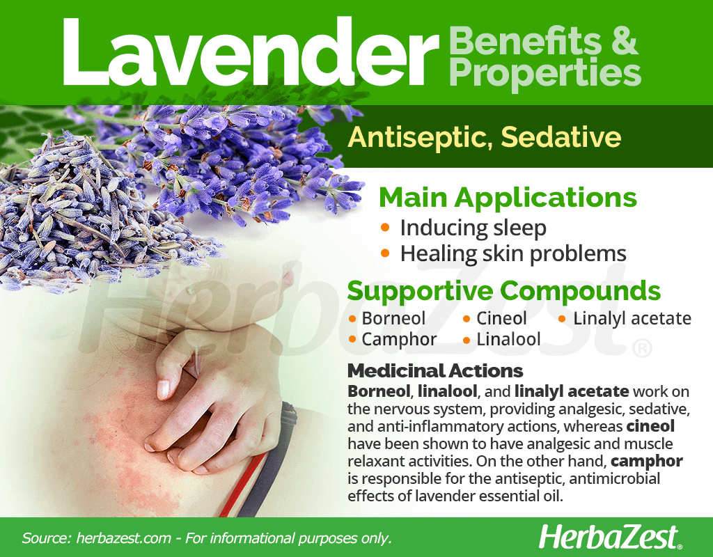 Lavender Benefits and Properties
