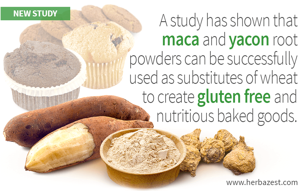 A study has shown that maca and yacon root powders can be successfully used as substitutes of wheat to create gluten free and nutritious baked goods.