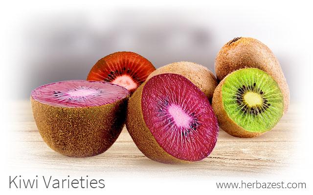 Kiwi Varieties