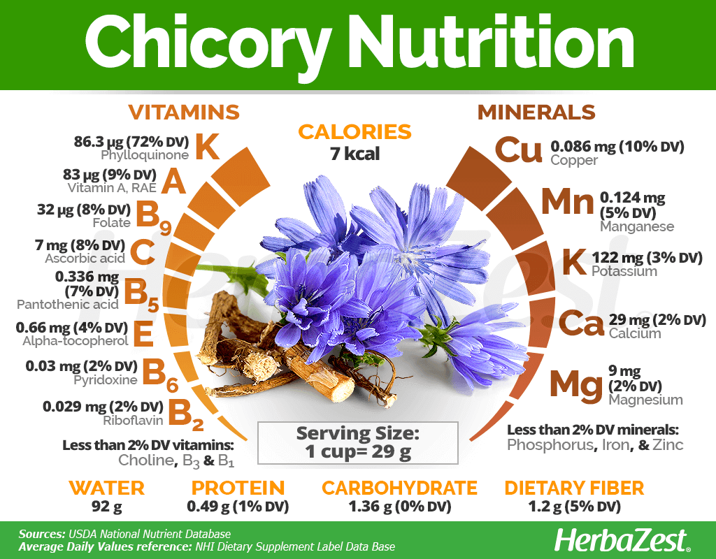 Chicory Nutrition