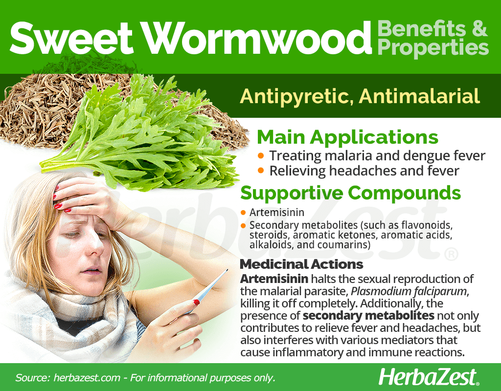Sweet Wormwood Benefits and Properties