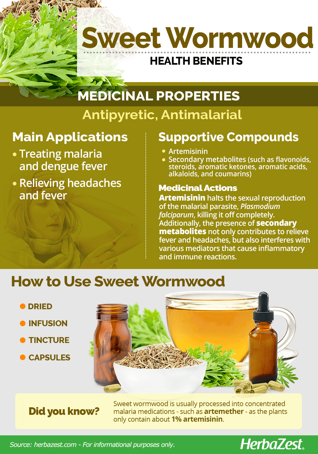 All About Sweet Wormwood