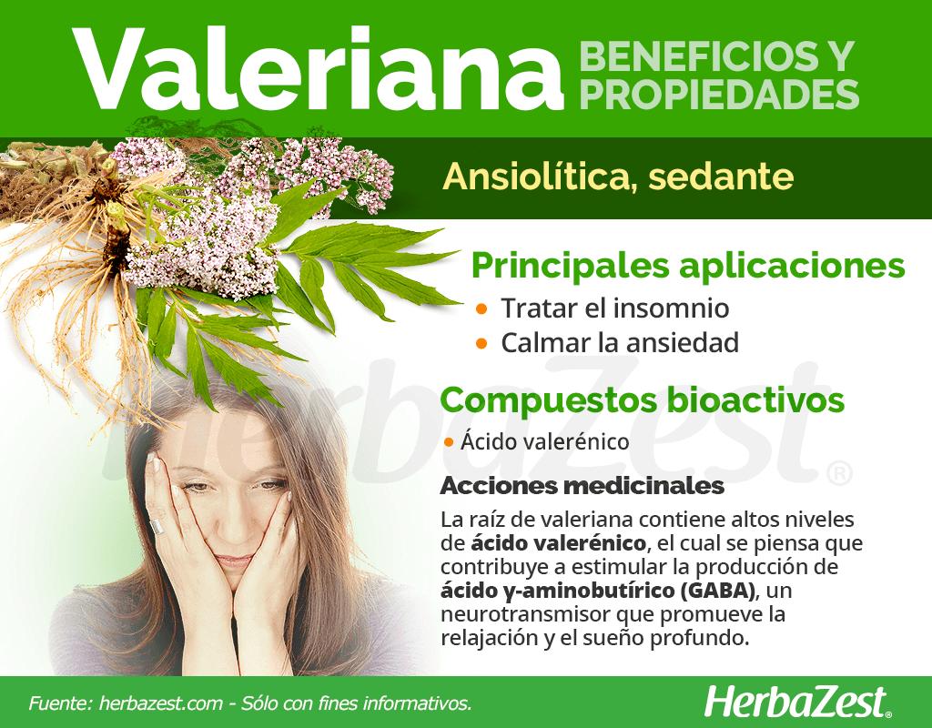 Beneficios y propiedades de la valeriana