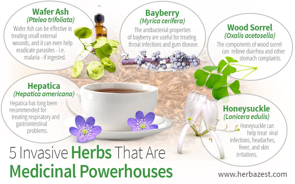 5 Invasive Herbs That Are Medicinal Powerhouses