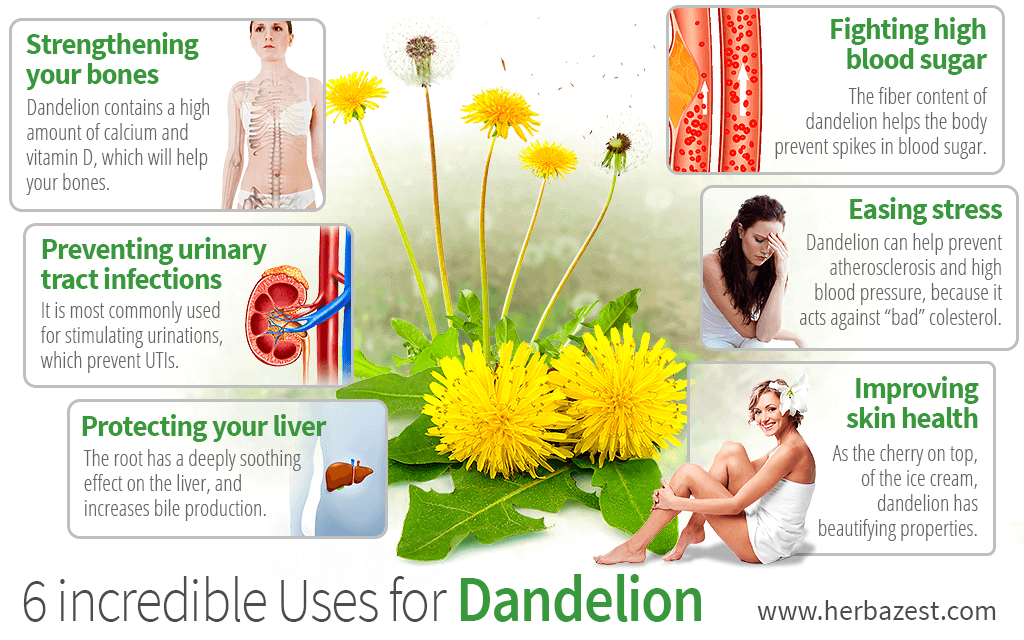 6 Incredible Uses for Dandelion