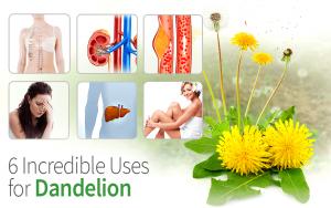6 Incredible Uses for Dandelion