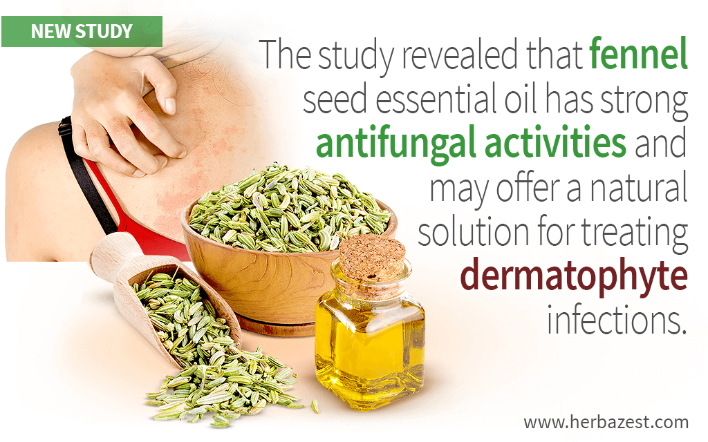 The study revealed that fennel seed essential oil has strong antifungal activities and may offer a natural solution for treating dermatophyte infections