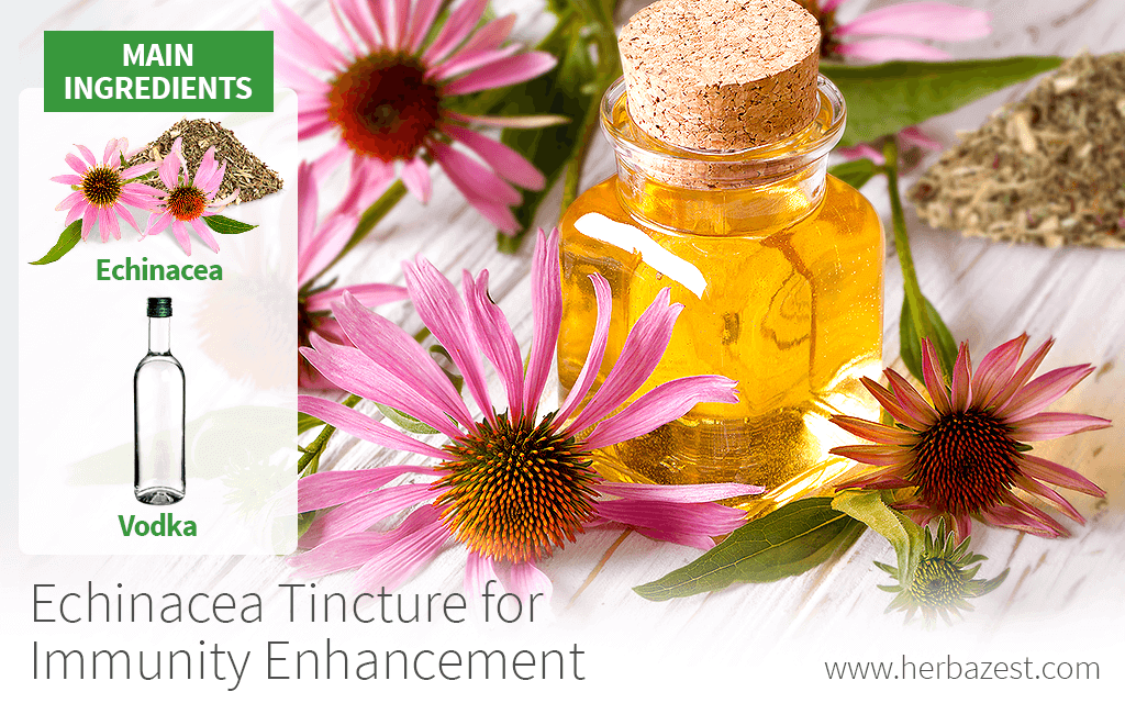 Echinacea Tincture for Immunity Enhancement