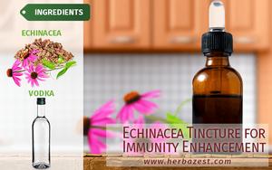 Echinacea Tincture for Immunity Enhancement