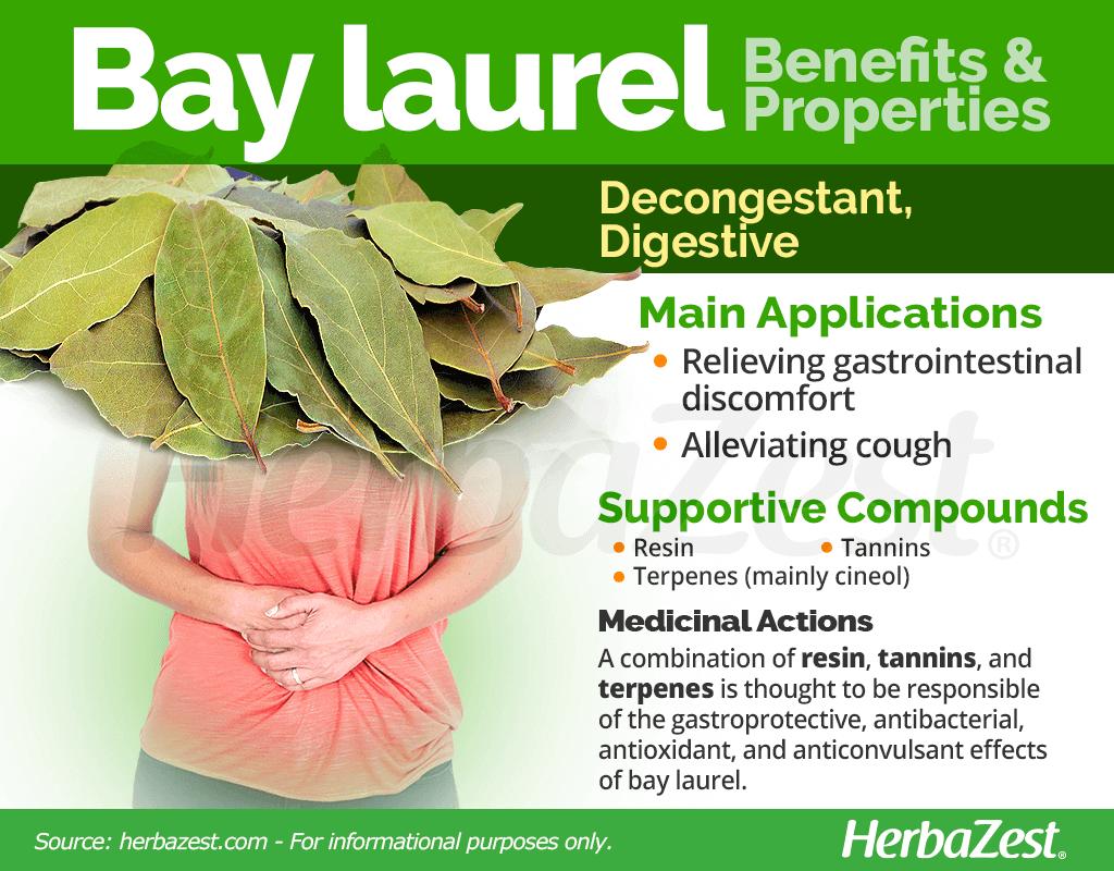 Bay Laurel Benefits and Properties