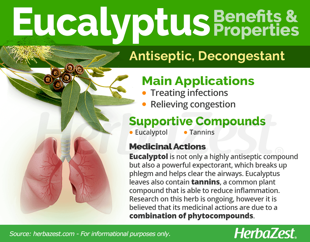 Eucalyptus Benefits and Properties
