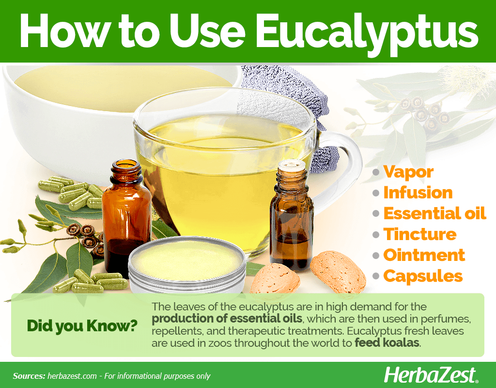How to Use Eucalyptus