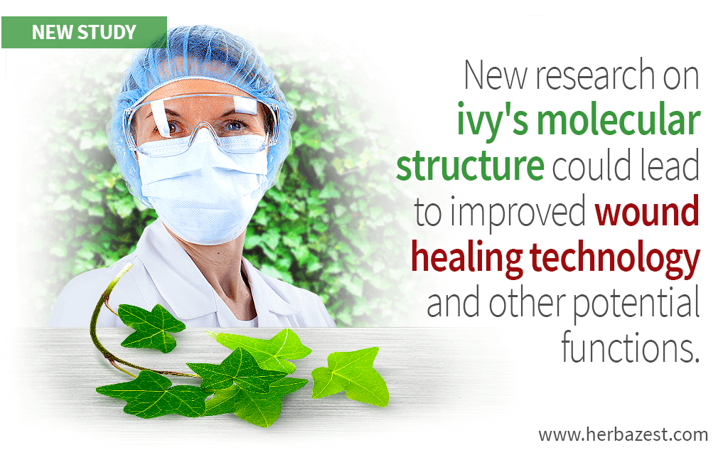 New research on ivy's molecular structure could lead to improved wound healing technology and other potential functions.