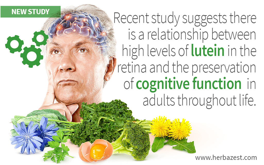 Recent study suggests there is a relationship between high levels of lutein in the retina and the preservation of cognitive function in adults throughout life.