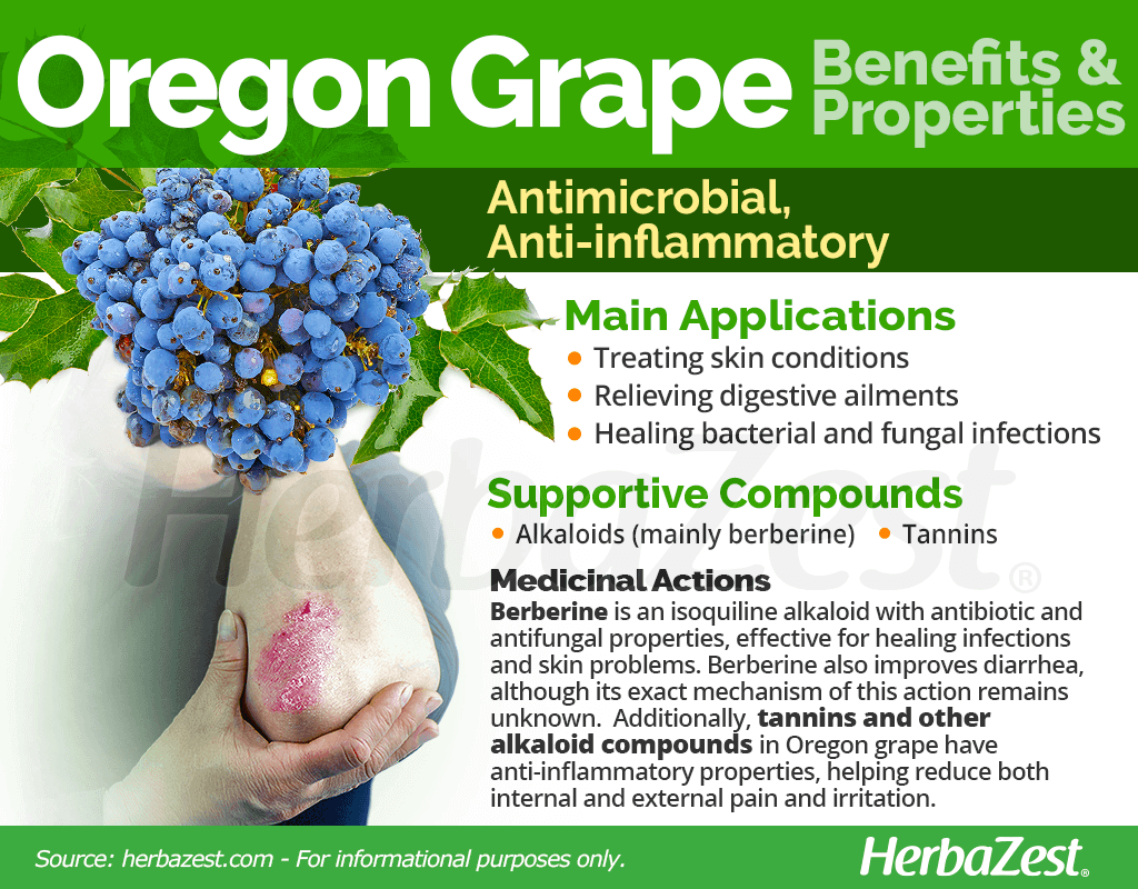 Oregon Grape Benefits and Properties