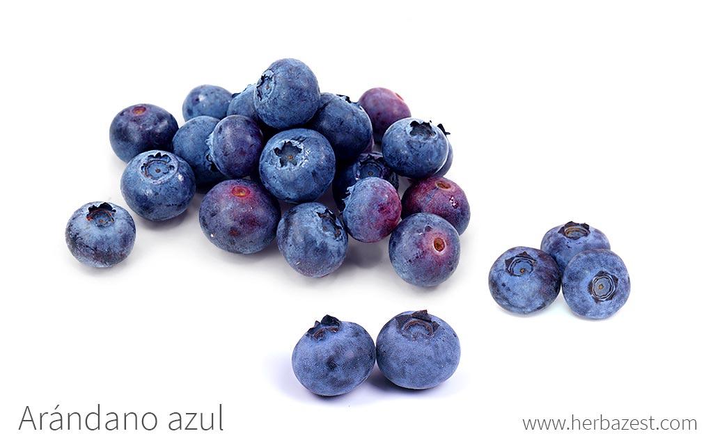 Arándano azul