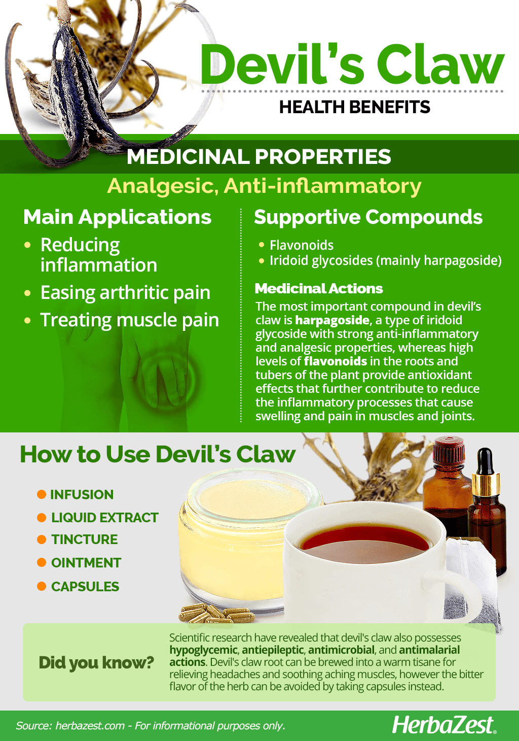 All About Devil's Claw