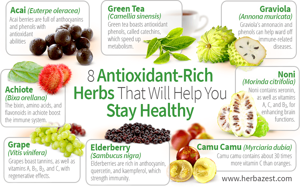 8 Antioxidant-Rich Herbs That Will Cleanse You From Within