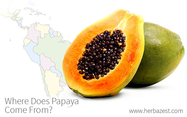 Where Does Papaya Come From?