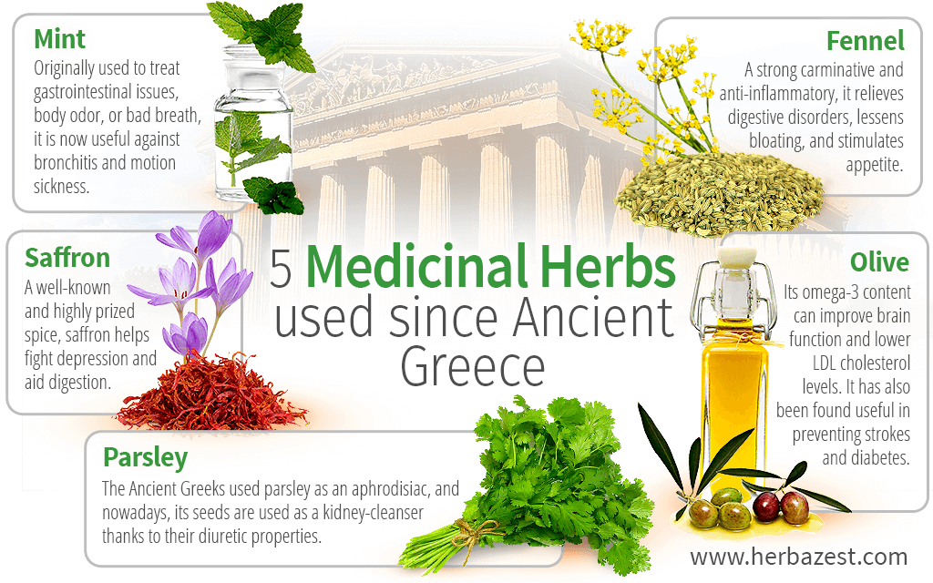 5 Medicinal Herbs Used Since Ancient Greece | HerbaZest