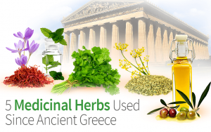 5 Medicinal Herbs Used Since Ancient Greece