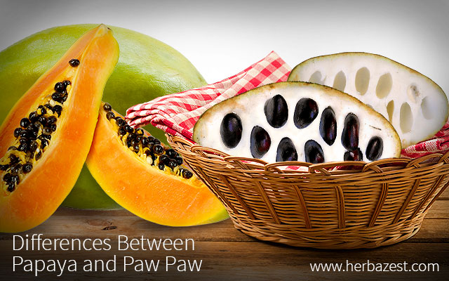 Difference Between Papaya and Paw Paw