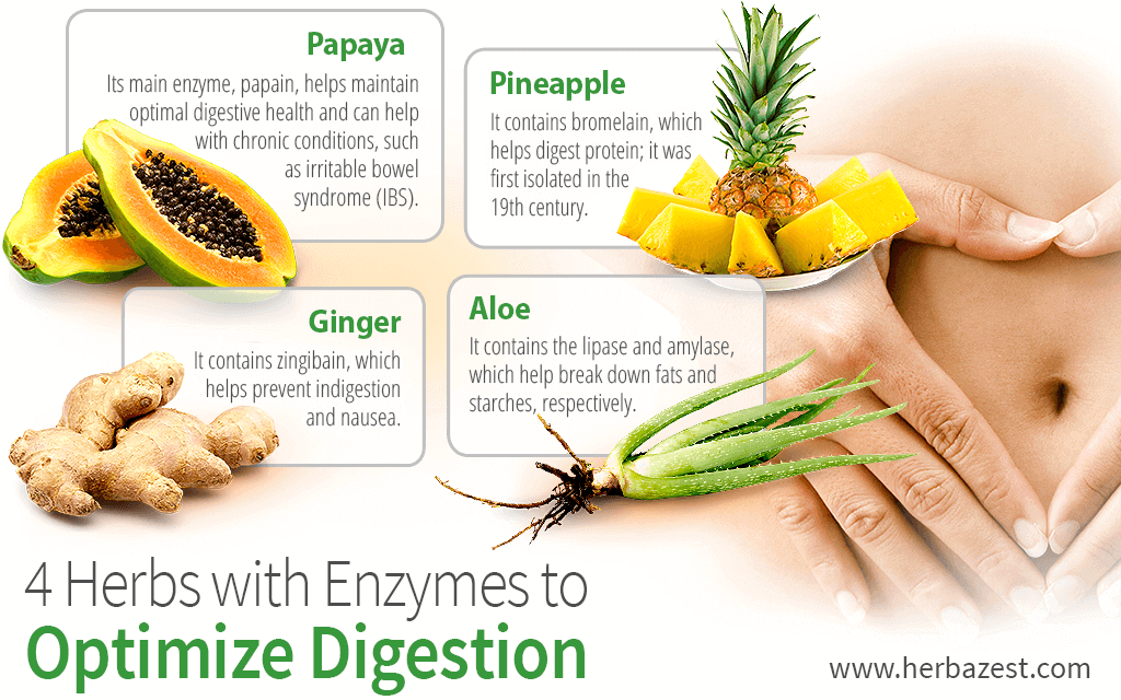 4 Herbs with Enzymes to Optimize Digestion | HerbaZest