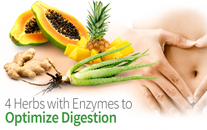 4 Herbs with Enzymes to Optimize Digestion