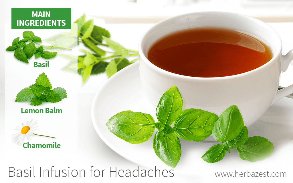Basil Infusion for Headaches