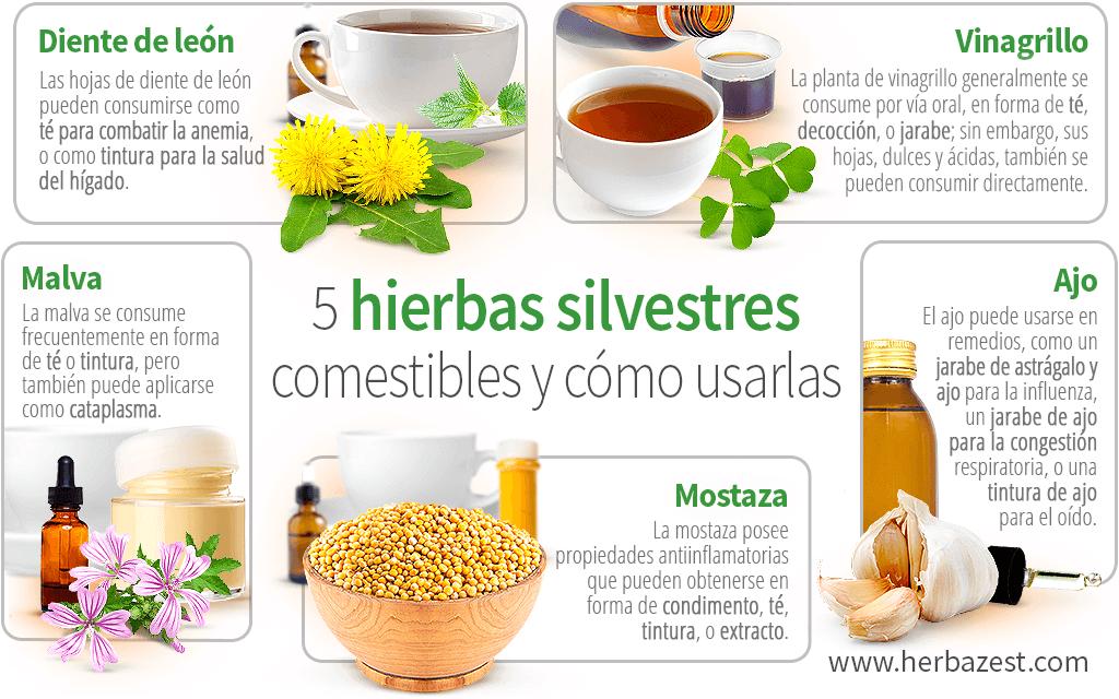 5 hierbas silvestres comestibles y cómo usarlas