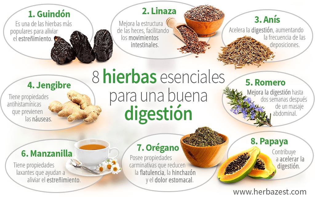 8 hierbas esenciales para una buena digestión
