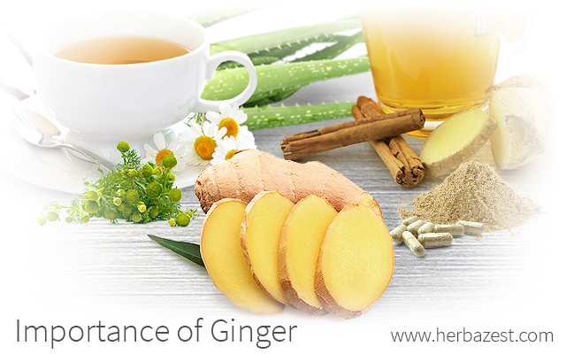 Importance of Ginger