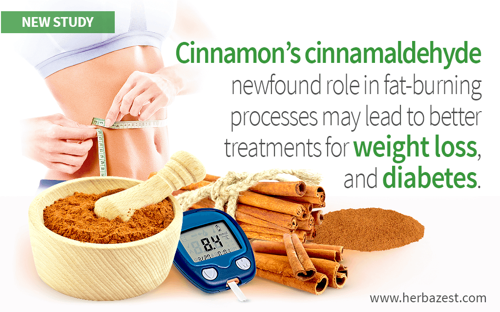 Cinnamon's Cinnamaldehyde Shown Effective for Weight Loss and Diabetes