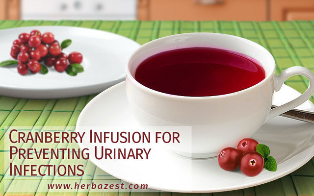 Cranberry Infusion for Preventing Urinary Infections