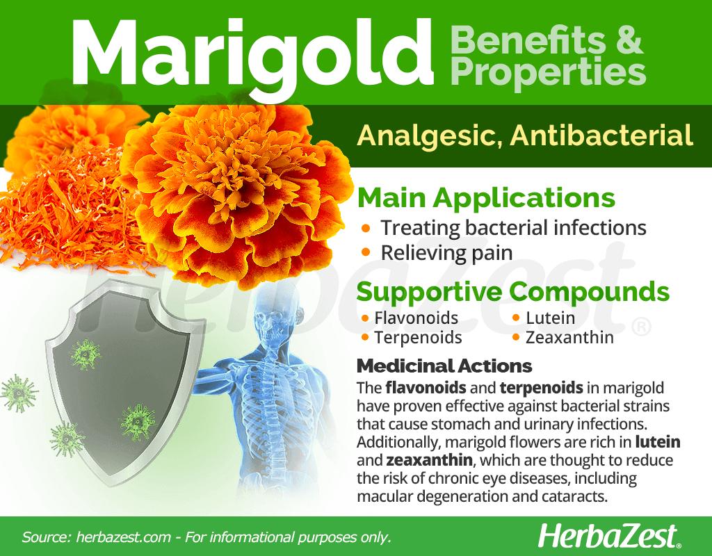 Marigold Benefits and Properties
