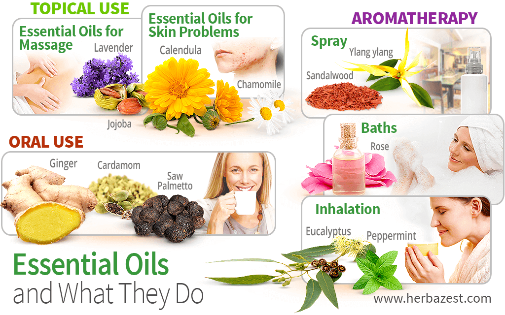 Essential Oils and What They Do
