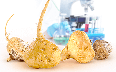 Effectiveness of Maca Root for Men's Fertility Shown by Study