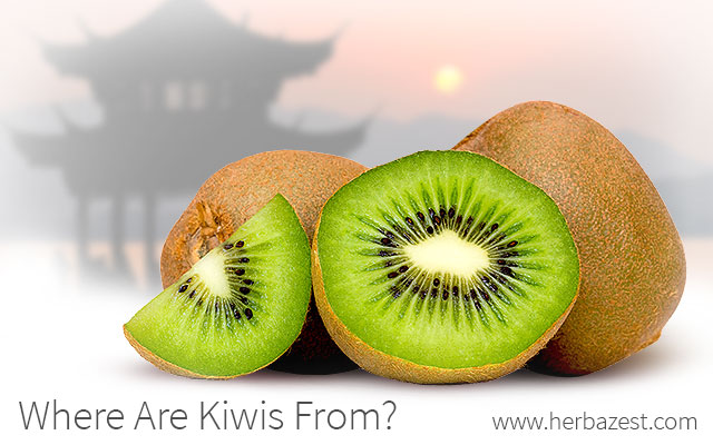 Where are Kiwis From?