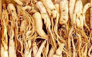 Growing Ginseng