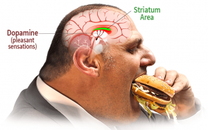 "Bad eating habits are hard to change because they are ""RECORDED"" in the striatum area of the brain, related to pleasant sensations."